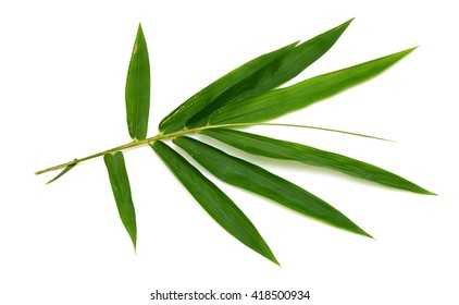 Leaf of Bamboo isolated on white background