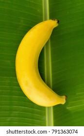 leaf banana single