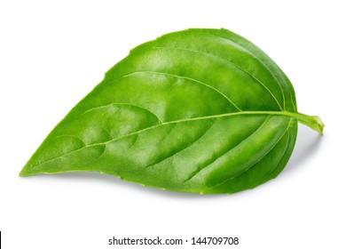 Leaf of basil isolated on white background