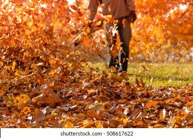 Leaf blower in action blowing fallen oak and maple leaves into a pile as the sun shines from behind