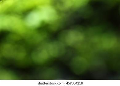 Leaf blurred for background.