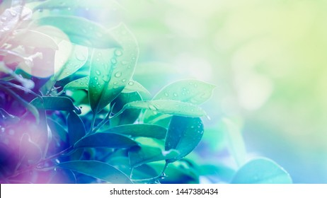 leaf and bokeh in blurred and soft color style for freshness , nature , season background