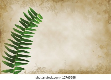 Leaf of a Boston Fern (Nephrolepis exaltata) plant on parchment textured background with grunge frame.