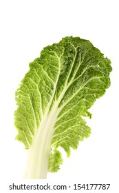 Leaf of chinese cabbage close up. White background.