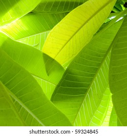 Leaf Close Up texture