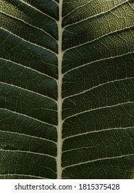 Leaf close up and useing lightroom app