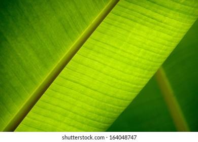 Leaf Close-up in Backlight