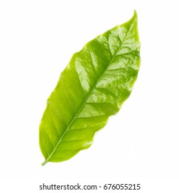 Leaf coffee isolated on white background
