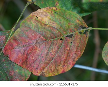 Leaf collection, very beautiful and colorful trees and leaf photo's.