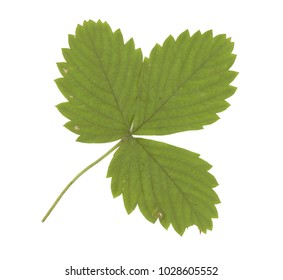 Leaf colorful on the white background high resolution