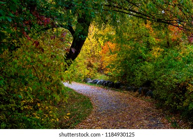 leaf covered path through city park in autumn with welcoming glow