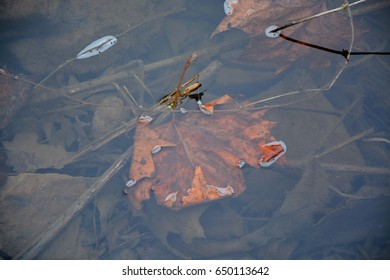 Leaf in the Creek