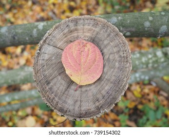 leaf death