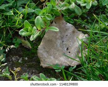 A Leaf Decays in a Field