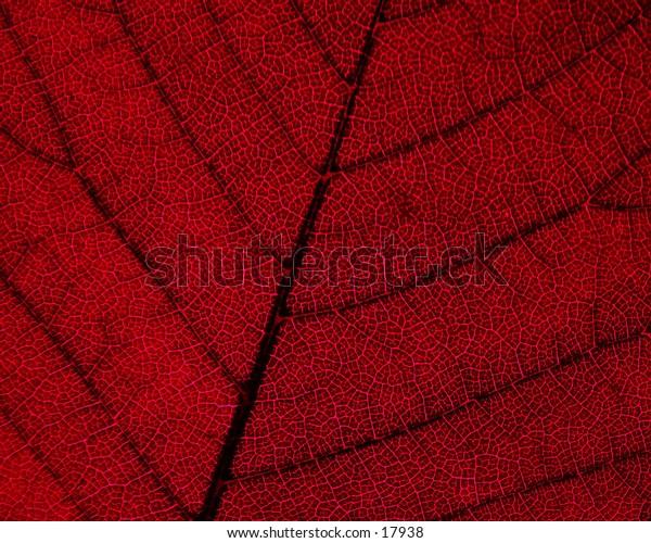 A leaf detail.