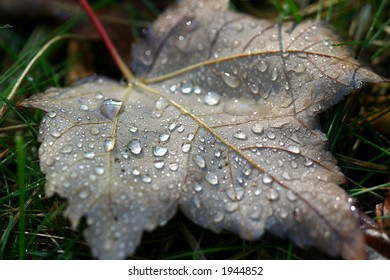 Leaf in the dew