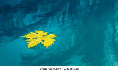 Leaf drifting in water