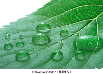 Leaf, drop of water