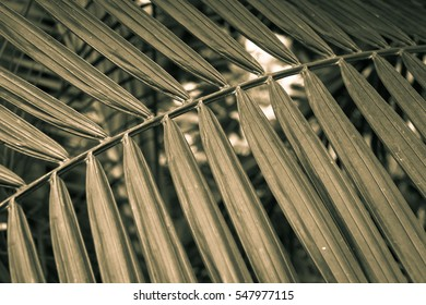 Leaf in duotone