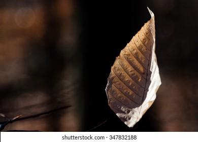 leaf during the autumn season