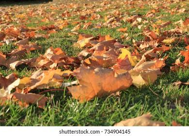 leaf fall in grass