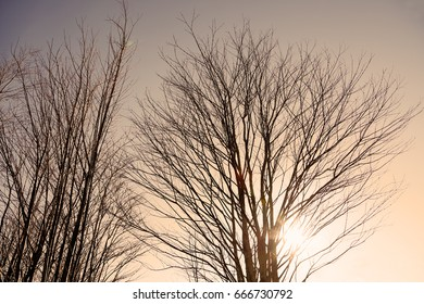 Leaf falling tree