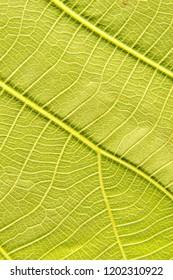 Leaf fibers background