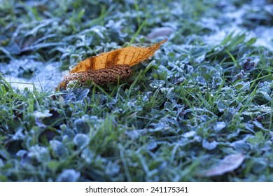 Leaf in frozen grass