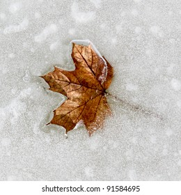 leaf frozen on ice