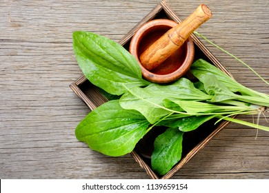 Leaf of greater plantain in box with a mortar