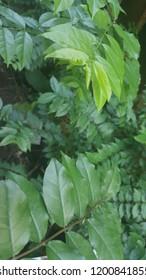 leaf green is mindfullness
