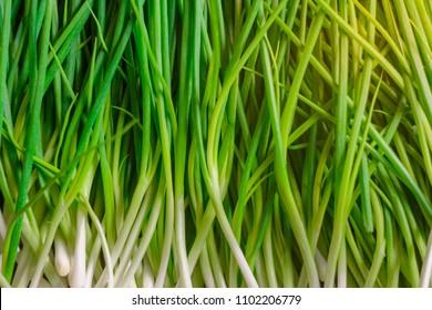 Leaf of Green Onion, Spring Onion, Scallion,Close Up