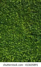 Leaf green vertical texture, plants
