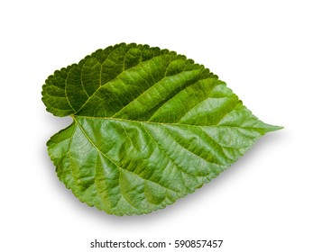 Leaf green and white background, clipping path