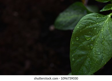 Leaf growing with sufficient water despite dark conditions. Copy space conceptual image.