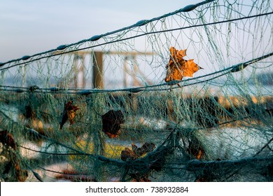 Leaf hanging from a fishnet