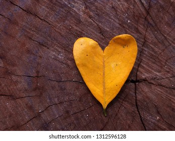 leaf Heart shape on wooden