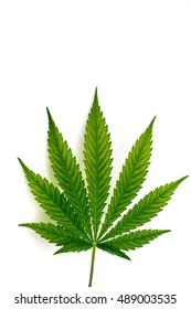 Leaf of hemp plant on white background