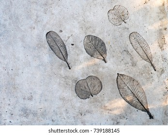 leaf imprint on concrete walkway in the garden