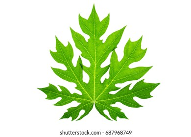 Leaf isolated on white background with clipping path