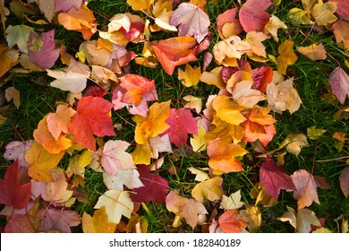Leaf litter background