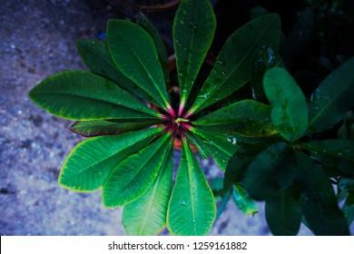 Leaf lobe.The leaf is like a turbine, with a green, red core.