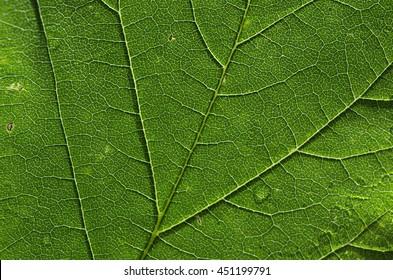 Leaf macro background
