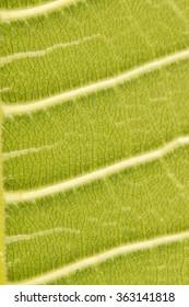 Leaf macro fiber surface