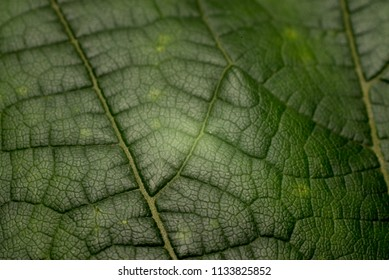 Leaf macro shot - background