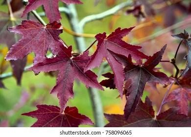 leaf nature colours