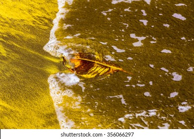 Leaf on Abstract Yellow Sand Background