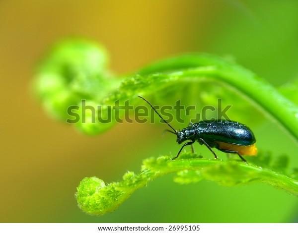 Leaf on the beetle