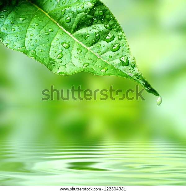 Leaf on a calm and fresh water
