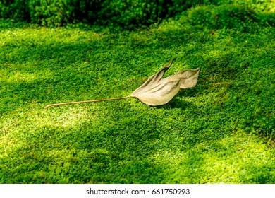 A leaf on Giou-ji temple's Moss Garden